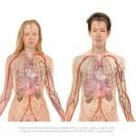 Nemoci a léčba
