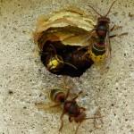 Agresivní hmyz a s ním spajté potíže