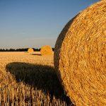 Bydlení na venkově přináší i svá rizika