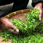 Zázračný Matcha Tea – zamilujte si ho