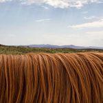 Rituál pro krásné vlasy v každém ročním období